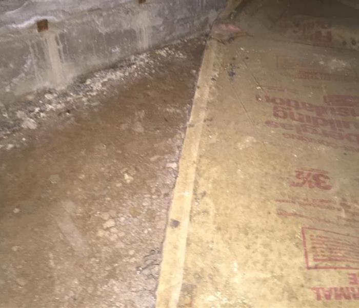 Mold in Crawlspace After