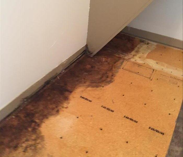 Mold Remediation Water Leaks Can Cause Mold Damage