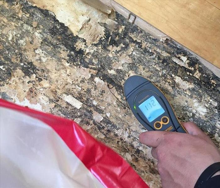 Mold Remediation What to do if your Boise home has mold damage