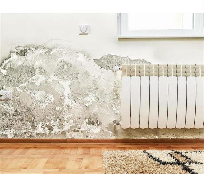 Mold Remediation What to do if You Find Mold in Your Home