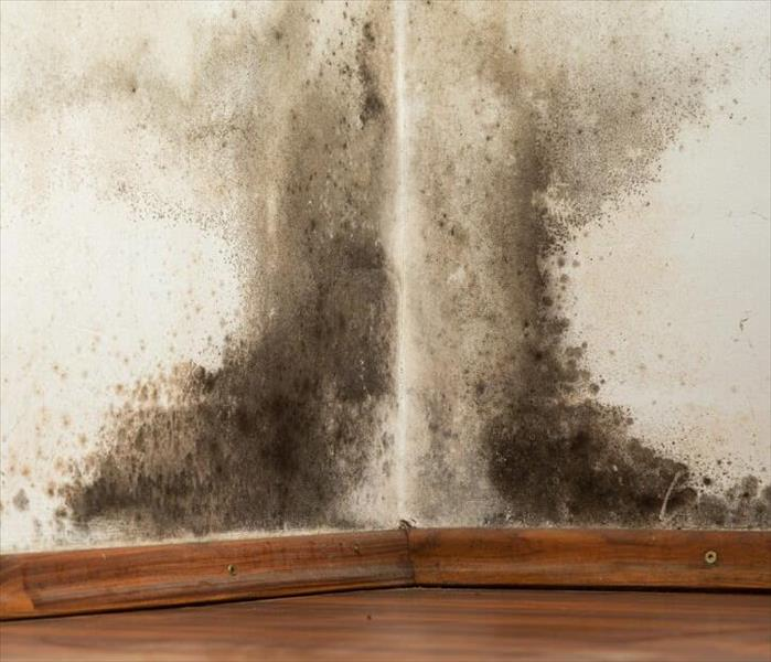 Mold Remediation Mold and Your Commercial Building