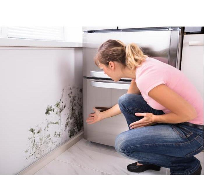 Mold Remediation Does Your Treasure Valley Home Have a Mold Issue?